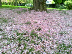 pink carpet (francesca.clemente) Tags: flowers light horse france beer leuven cathedral champagne parking francesca reims viaggi polo gatti cagliari clemente wildboar gambetta maredsous woinic francescaclemente clementefrancesca