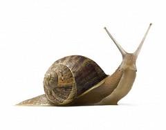 42-24170443 (gonz portas) Tags: white animal animals cutout insect slow wildlife fulllength shell snail nobody indoors whitebackground slug length naturalworld gastropod slimy mollusk invertebrate closeupview