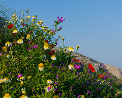 spring colors (Lisovyk) Tags: colors easter island greece amorgos     lagkada