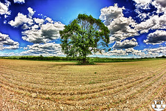 Lonely Tree in Spring (Pyranha Photography | 300k views - THX) Tags: sky cloud tree green nature beautiful beauty clouds canon landscape photography eos austria evening sterreich spring google high flickr dynamic time earth bue g year jahreszeit natur istockphoto creative mother feld himmel wolken pi ren plus lonely grn blau leafs landschaft range hdr burgenland acker linkedin schn shutterstock pyranha twitter fotolia 500px 60d mygearandme mygearandmepremium mygearandmebronze