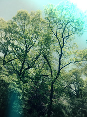 5/13/13 | 01/365? (___rei) Tags: blue trees summer blur green colors garden aqua mesh may bluesky filter greenery verdant 365 lush filters frommywindow edit sunnyday edits iphone sunnyafternoon colorwash 51313 iphonography pixlromatic