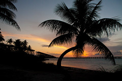 Back to the Island (grandalloliver) Tags: world sunset vacation plants sun tree beach nature water beauty night photoshop canon landscape island golden flora raw florida wideangle palm tropical april floridakeys bahiahonda topaz photoshopelements floridastatepark bahiahondastatepark canonefs1755mmf28usm garyoliver rebelxsi canonxsi topazadjust grandalloliver grandalloliverphoto