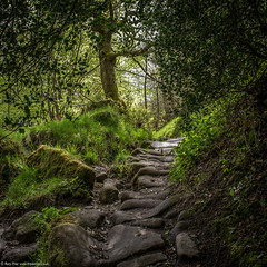 The Ancient Path (Rory Prior) Tags: trees green woodland track path fresh cobbles dappled hebdenbridge hardcastlecrags