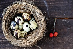 quail eggs (Zoryanchik) Tags: life food brown white holiday color macro bird cooking nature up animal closeup breakfast easter cuisine spring healthy raw pattern close natural nest symbol little background object traditional small egg group shell tasty nobody fresh gourmet health meal eggs organic diet product protein quail eggshell delicatessen nutritious ingredient fragility