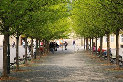 Prag - Goldene Stadt (haegar52002) Tags: digital prag tschechien 2013 goldenestadt nikond700 gesaumtvonbaumen