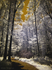an infrared path (BryanBowman) Tags: trees ir photography dc infrared