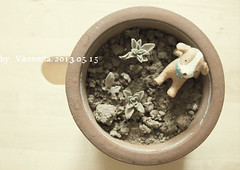 (@) Tags: morning plant blur flower cute corner toy nikon gardening craft flowerpot growing mystuff  zakka   decoratiom