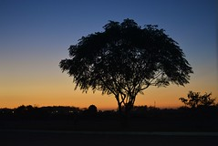 Amanhecer (eloisa hamanaka brun) Tags: morning tree sol azul do gradient dawning amanhecer sal manh degrad arroio