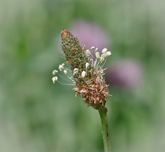 Thing's in a Field. (Omygodtom) Tags: pink wild white macro green nature field bokeh tamron90mm d7000