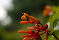 Group discussion. (shayan444) Tags: life light plant flower macro nature evening bokeh group ants discussion smallworld groupdiscussion greenbackground smallcreatures smalllife