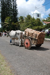 Firewood Delivery (B.Polon) Tags: church latinamerica animal wagon photo costarica village ox tropical oxen firewood oxcart yoke ticos sarchi yoked d80 oxcartfestival tierrasmorenas paintedwoodencart