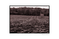 Monochrome furrows (Rich3591) Tags: summer countryside surrey horsham faygate