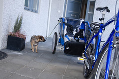 Bella Biking (wargur) Tags: dogs trek biking chariot borderterrier