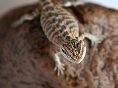 3228 (msc_road) Tags: snake monitor python geckos reptiles beardeddragons