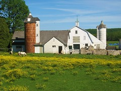 Bucks County Farm - PA (Tim Loesch) Tags: weeds pennsylvania farm silo pa ponies buckscounty
