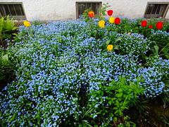 Neu-Ulm, Bavaria (Germany), Dammstrae in springtime (Josef Lex (misin cumplida!)) Tags: neuulm fantasticnature dammstrase