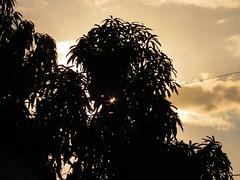 La Mangifera indica del Destino (Erick (Rebaya17)) Tags: sombra mango silueta naranja ocaso tarde marte crepsculo melocotn indica mangiferaindica mangifera crepsculovespertino