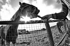 Feeding thec Horse. (CWhatPhotos) Tags: pictures from above sky horse up animal animals by canon that lens eos photo focus skies foto looking with view angle feeding photos eating wide picture taken fisheye using have photographs photograph adobe 7d below feed manual dslr lightroom filly 65mm aspherical opteka fisheyeview fisheyed cwhatphotos