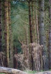 Enchanted forest (Belhaven2011) Tags: wood trees tree green nature pine forest still log silent natural tranquility calm earthy fir serene forestfloor spruce dense tranquilscene nikond7000 belhaven2011 johnlawsonbelhaven