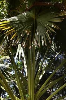 A visit to Foster Botanic Gardens (76)