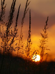 Un autre jour ... ***-* ---° (Titole) Tags: orange grass herbes gamewinner graminée soleillevant unanimouswinner supercontest friendlychallenges diamondsawards thechallengefactory storybookwinner titole favescontestfavoriteson nicolefaton neicampiinthefieldsdansleschamps