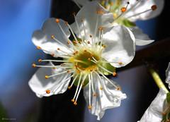-//- (Fotis Gatsios) Tags: flowers macro nature canon canoneos400d fotisgatsios