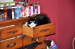 DSC_0140 (robj_1971) Tags: cat nikon kitty patches d90