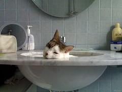 Regalami un sorriso (Aellevì) Tags: bathroom kitten bagno gatto crema lavabo gattino tonino givemeasmile kittyinthesink gattonellavabo