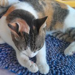 น้องสาวแอนนา ก็เพ่งจะตื่น พี่น้องรักกันนอนคู่กันตลอด #แมว #สัตว์เลี้ยง #น่ารัก