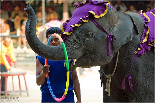 Представление слонов | Thailand