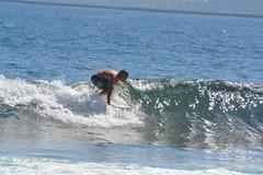 DSC_0078 (aliciadesign) Tags: surf whales bigisland honolii