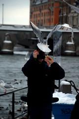 Photographer (josephzohn   flickr) Tags: birds fotograf photographer strmmen fotografering