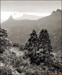 Mt.Anne E14_b&w (mckenart) Tags: trekking australia bushwalking tasmania kodachrome wilderness lotswife mtanne pencilpine pandanishelf mountweld