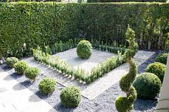 (deanmackayphoto) Tags: yard garden landscape design losangeles gate topiary entrance hedge drought shrub westhollywood gravel boxwood landscapedesign droughtresistant larisacode