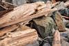 Driftwood , Serenity after the storm – Britannia Beach (janusz l) Tags: storm west coast rocks bc northwest north driftwood shore serenity after daytrip janusz leszczynski britanniabeach 075411 02022015