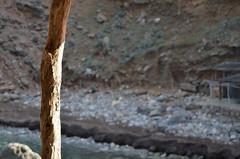 Cala Dei (xavi2794) Tags: costa mar nikon mallorca cala baleares dei d5100