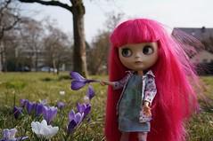 172/365 crocus ... spring is coming