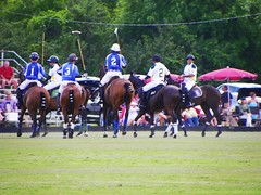POLO TEAM PLAYERS (carolynthepilot) Tags: travel horses horse usa game argentina beautiful speed carolyn t nbc team mare postcard player canvas adventure explore photograph bbc abc highfive sa halftime sporting polo stallion studs nationalgeographic lwr worldtraveler chuckers worldtraveller bbcphoto pologame poloteam handshigh carolynbistline carolynthepilot bistline exotichorses thesportofpolo teeamplayers