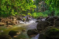 Hawaii Forest II (deyveone) Tags: tree leave nature water leaves stone forest hawaii wasser bach blatt bltter stein aum