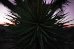 The Extravagant Journey (thedarkerdark) Tags: california sunset nature desert joshuatree magichour carloscastaneda journeytoixtlan exploretocreate