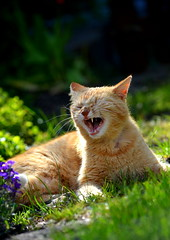 cat (Sheli221) Tags: flowers light animal cat garden photography photo spring nikon katze tier miau funnycat lovecats katzenfoto bestmoment catphotography nikond5100 browngoldcat