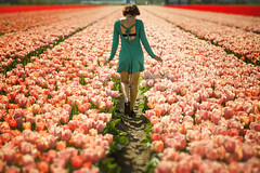 Tulips in Holland (siebe ) Tags: woman holland netherlands dutch landscape spring scenery tulips outdoor path walk nederland scene tulip lente vrouw landschap tulpen tulp lisse 2016