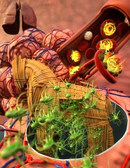 Host infection stimulates antibiotic resistance (National Institutes of Health (NIH)) Tags: trojanhorse bacteria salmonella infection photoillustration antibiotics ucsantabarbara macrophages nhlbi nigms antibioticresistance drugresistantbacteria nihimagegallery