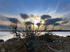 Se pone el sol. (Paulina58) Tags: salinas alicante puestadesol horizonte paulina torrevieja parquenatural paulina58