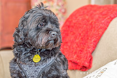 Cute Rescued Pup (Chris Liszak Photography) Tags: dog pet pets canada color colour dogs wow photo posing sharp stunning nikond3200 petphotography chrisliszakphotography