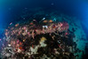 Cannon Pile (ShaunMYeo) Tags: scubadiving gibraltar cannons calpe underwaterphotography جبل gibilterra ikelite طارق גיברלטר 直布罗陀 гибралтар γιβραλτάρ gibraltár الطارق cebelitarık gjibraltar ĝibraltaro hibraltar xibraltar giobráltar gibraltārs gibraltaras ġibiltà जिब्राल्टर ஜிப்ரால்டர் జిబ్రాల్టర్ ยิบรอลตา جبرالٹر גיבראַלטאַר गिब्राल्टर জিব্রাল্টার 直布羅 陀જીબ્રાલ્ટર ジブラル