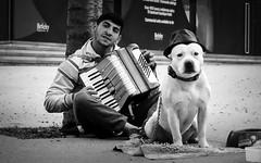 London - street musician (Stefan Sellmer) Tags: street england bw dog london thames gb streetmusican vereinigtesknigreich