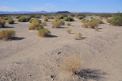 Amboy Crater (faungg's photos) Tags: california usa nature landscape us desert    amboycrater