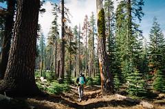 Little Baldy Hike (HikerDude24) Tags: california trees mountains tree nature forest landscape outdoors nationalpark nikon hiking sierra sierras sierranevada sequoia sequoianationalpark d5100