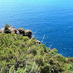 Foto-18-06-16-13-46-27 (fdpdesign) Tags: camogli portofino escursionismo 2016 liguria italia italy apple iphone mare monti sentieri sea instagram